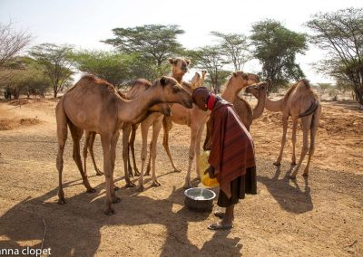 Turkana woman camels