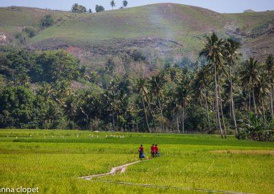Indonesia Rice-Paddies Landscape