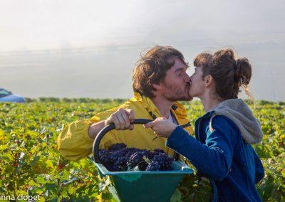 Kiss#Vendanges#grapes#grape-picking#love